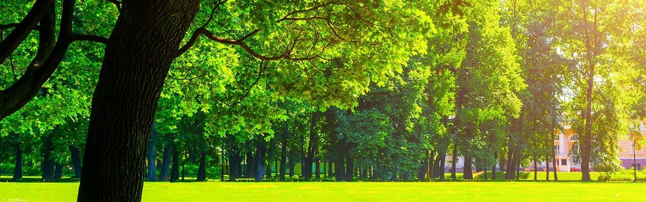 alberi-tradizione-o-innovazione